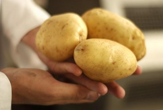Es gibt nur 1 wahre Remo-Kartoffel